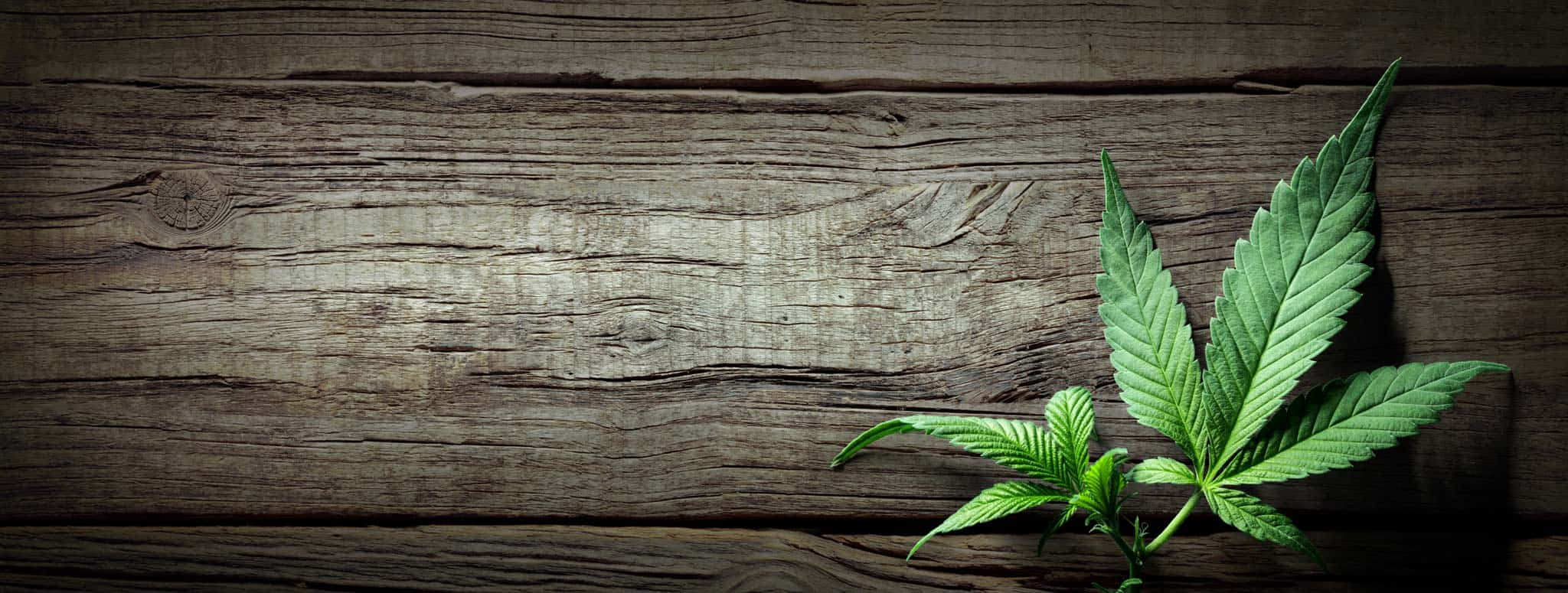 Wooden background with marijuana leaf for CBD oil